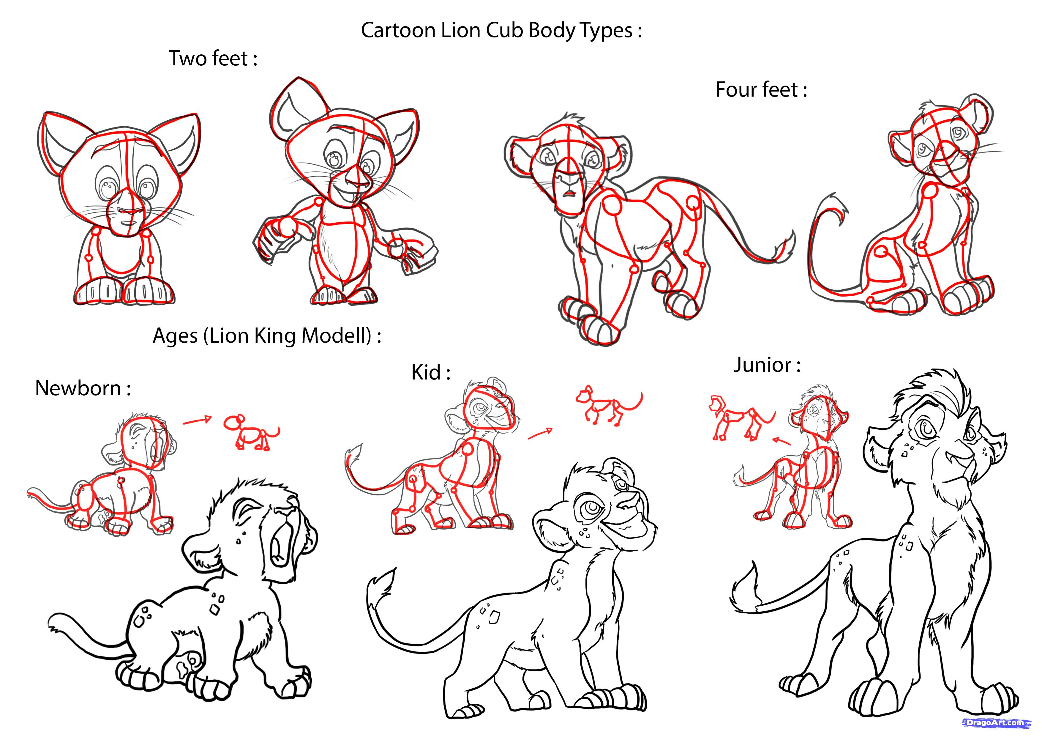 Lions Step By Step Drawing At Getdrawings Free For Personal