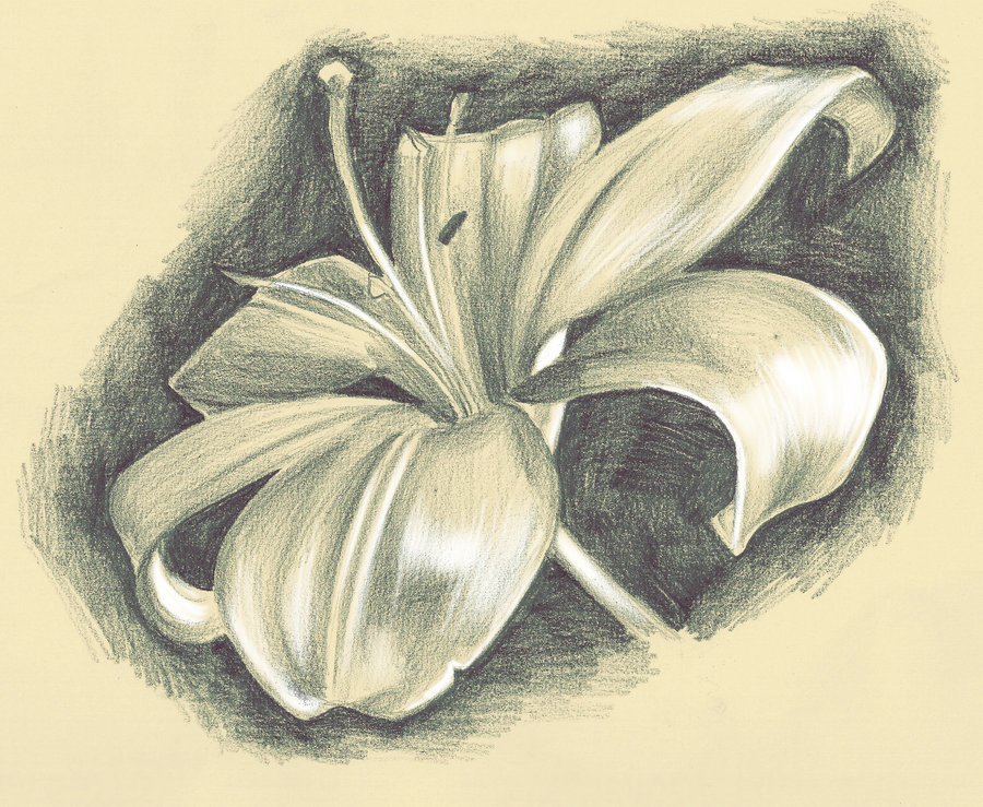 900x739 Live Drawing Lillies By Glory Day