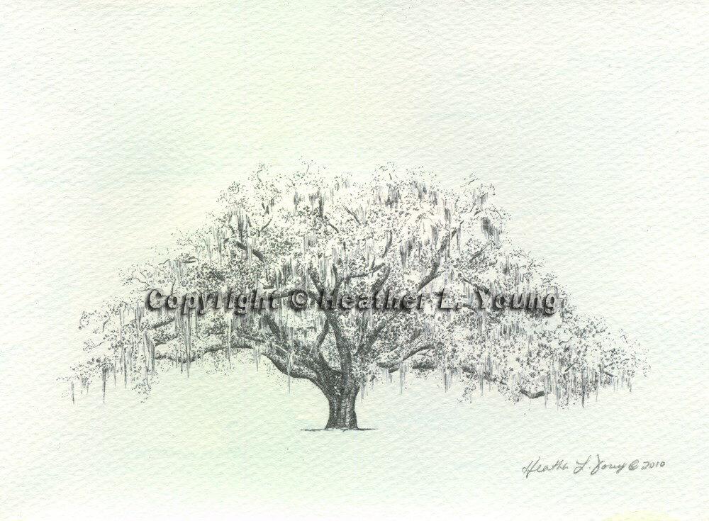 1000x735 Candler Live Oak Tree Savannah Drawing Print Blue Watercolor Wash