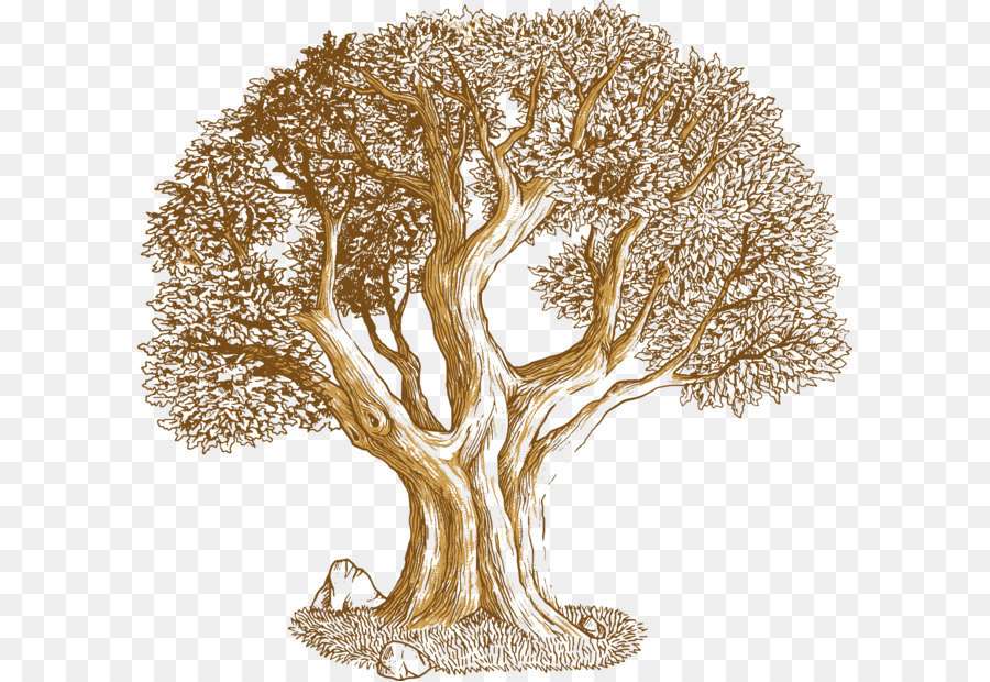 900x620 Euclidean Vector Tree Southern Live Oak