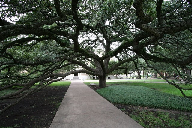 640x427 Gc70rhf Live Oaks (Traditional Cache) In Florida, United States
