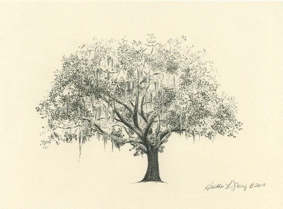 570x422 Gordonston Savannah Live Oak Tree Pen And Ink Drawing Tree