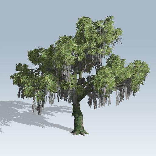512x512 Live Oak (V7)