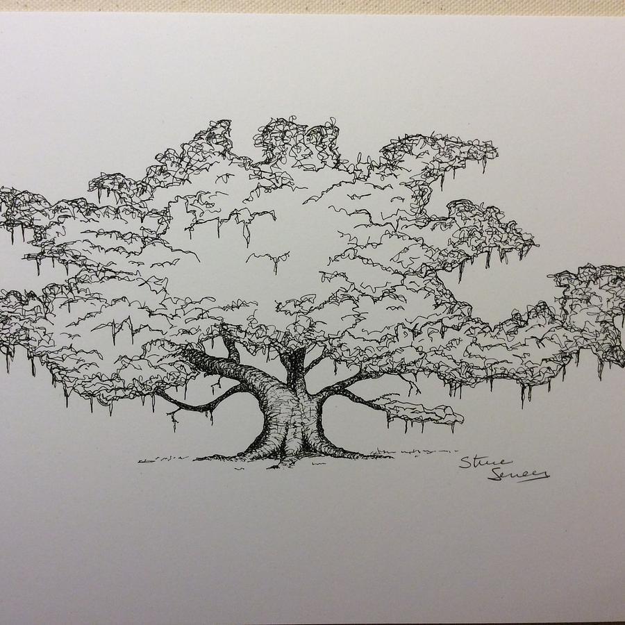 900x900 Live Oak In Blackwhite Drawing By Steve Seneca