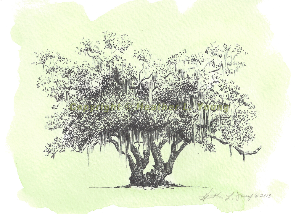 1000x724 Live Oak Tree Flyoung Studio