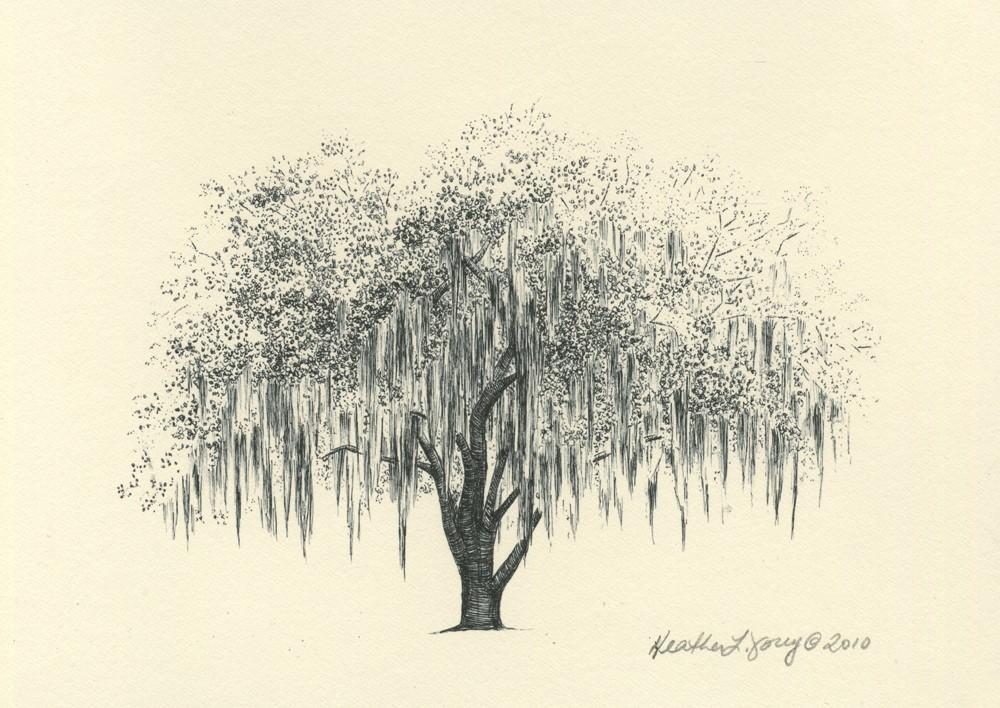 1000x708 Savannah Live Oak Tree Pen And Ink Drawing Print