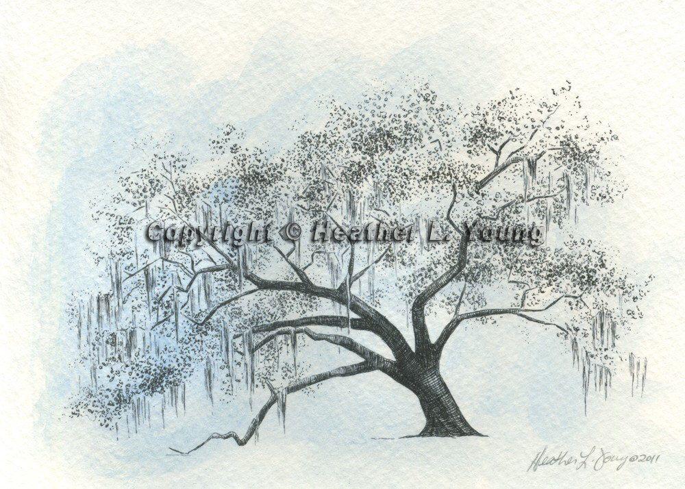 1000x714 Ford Plantation Gateway Live Oak Tree Drawing Print In Icy Blue
