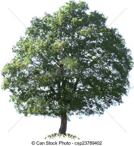 433x470 Oak Tree Vector Illustration Cutout Vector Clipart