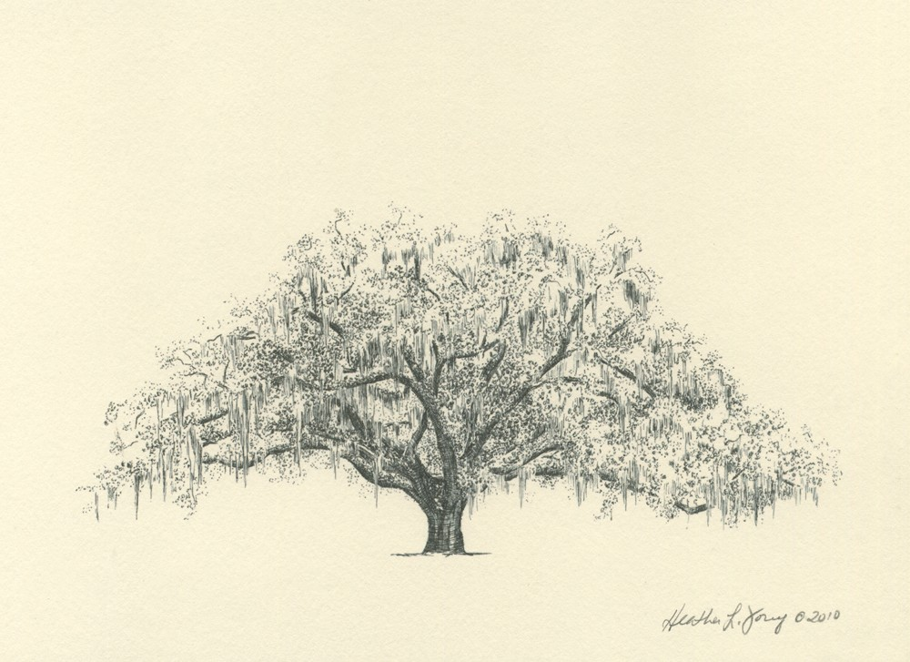 1000x727 Savannah Candler Live Oak Tree Pen And Ink Sketch Chats Savannah