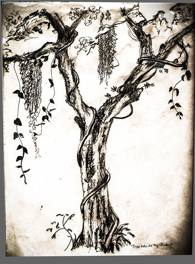 663x900 Tree Outside My Drawing By Christy Usilton