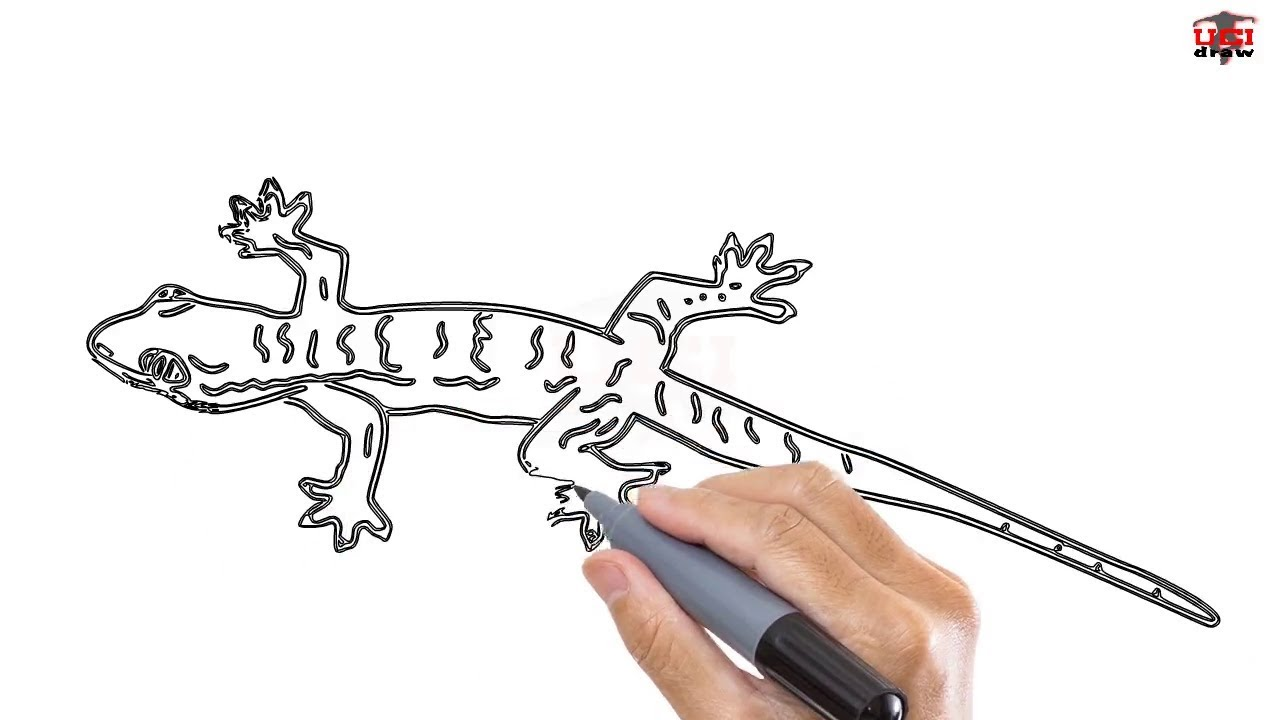 1280x720 How To Draw A Lizard Easy Step By Step Drawing Tutorials For Kids