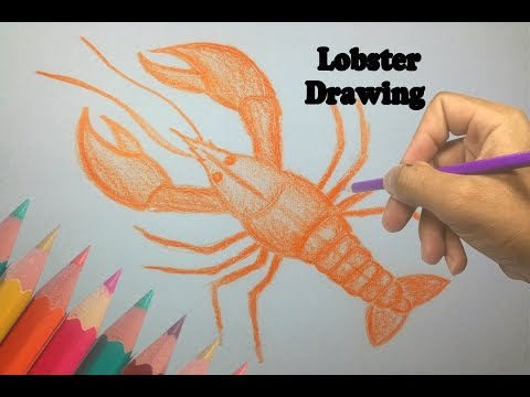 480x360 How To Draw A Lobster