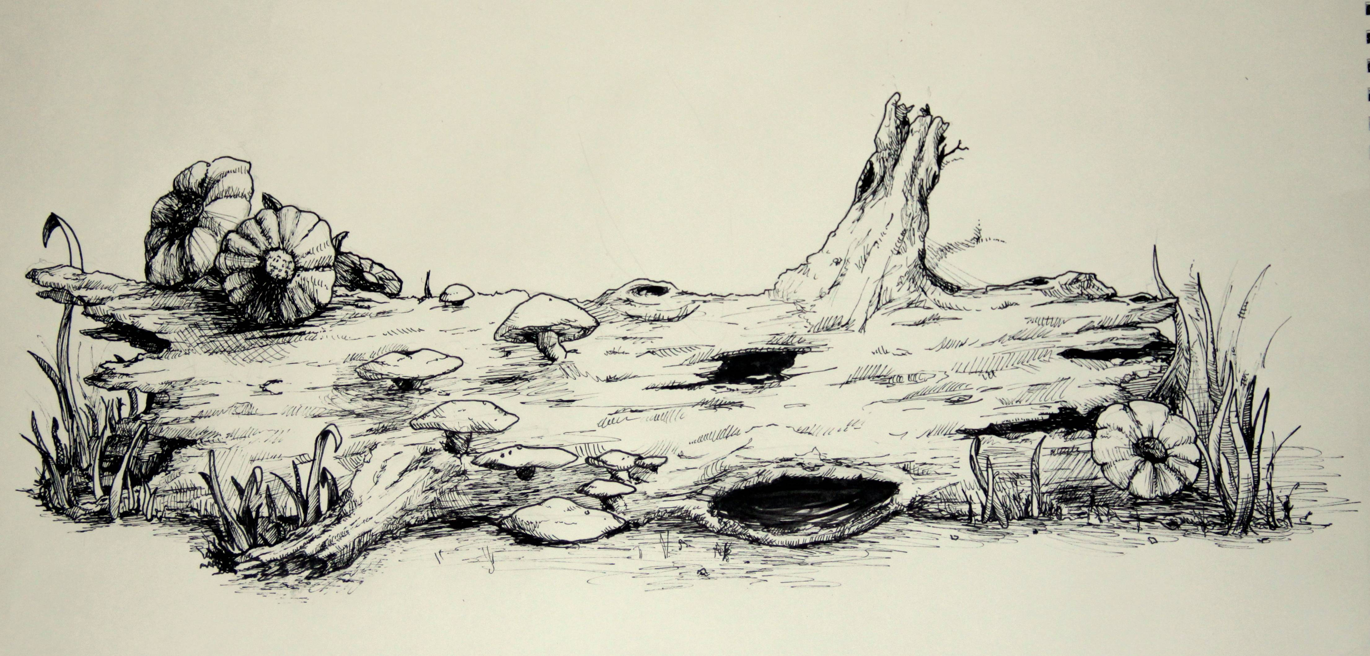 Log drawing at getdrawings free for personal use