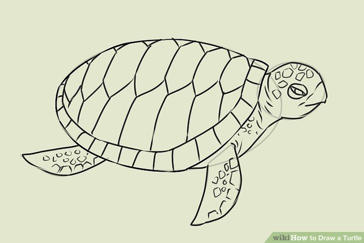 728x485 4 ways to draw a turtle