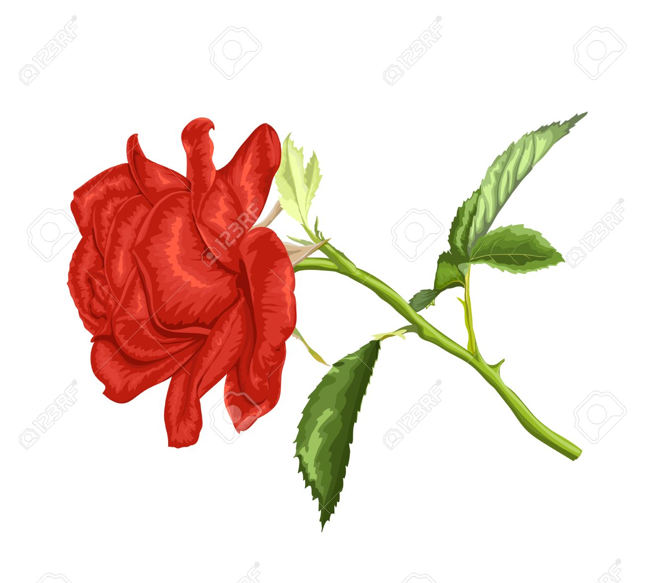 1300x1175 Beautiful Red Rose With Long Stem And Leaves With The Effect