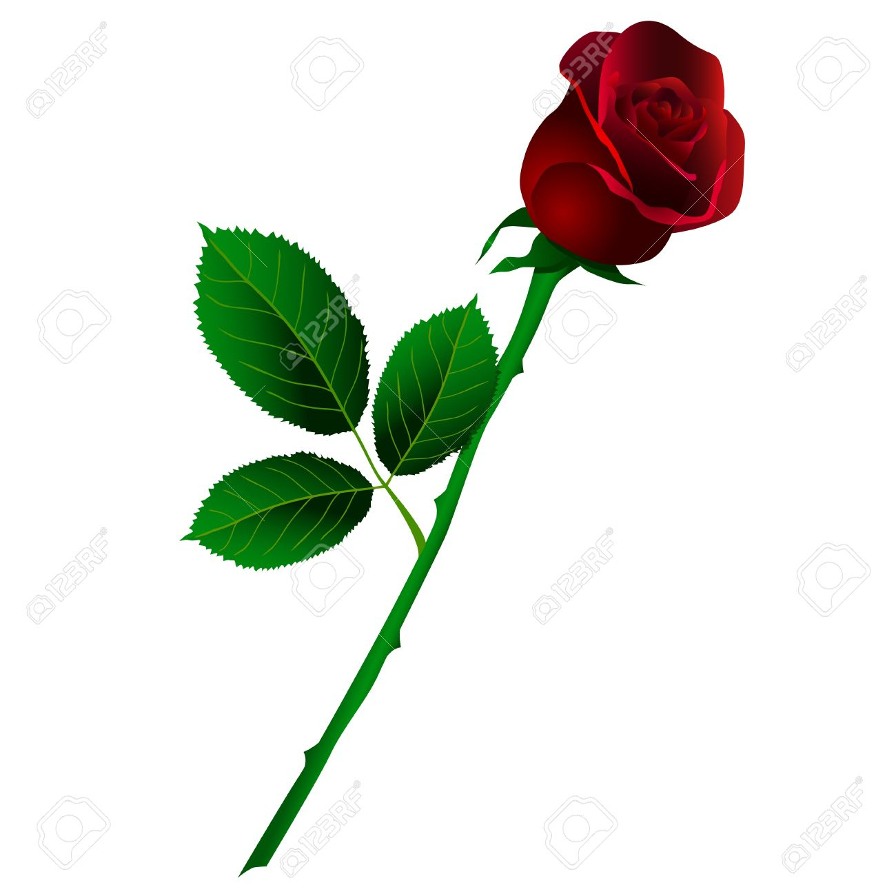 1300x1300 Long Stem Rose Drawing Drawn Red Rose Long Stem