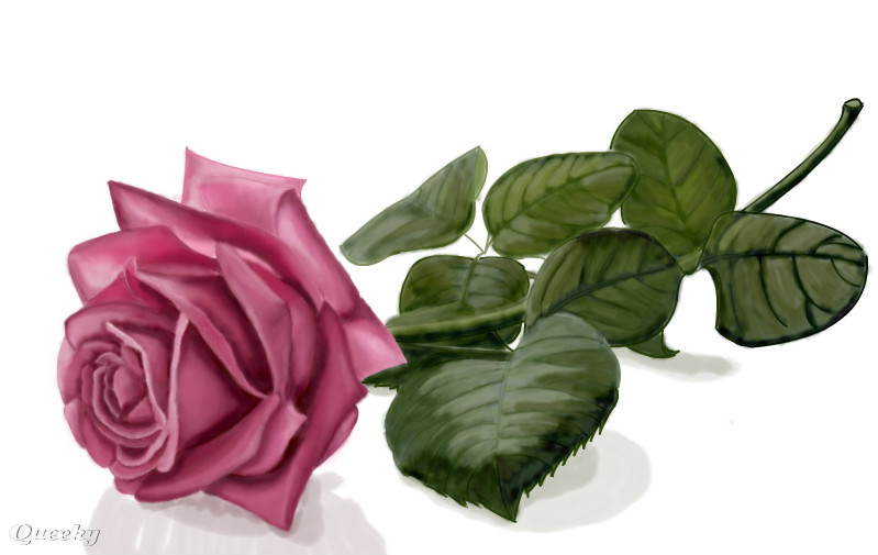 799x505 Pink Long Stemmed Rose A Plants Speedpaint Drawing By