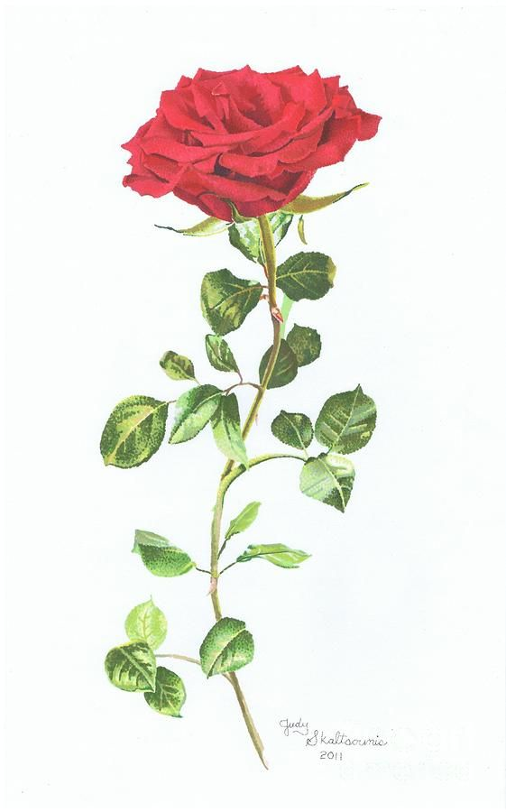 561x900 Red Rose On Long Stem Tattoo Design