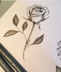 236x278 Rose Tattoo Designs Rose Tattoos, Tattoo Designs And Tattoo