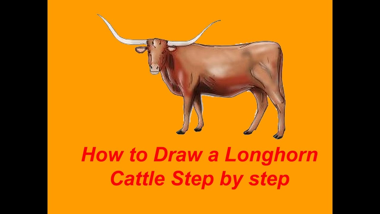 1280x720 How To Draw A Longhorn Cattle Step By Step