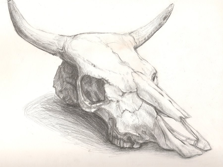 Longhorn Skull Drawing At Getdrawings Free For Personal Use