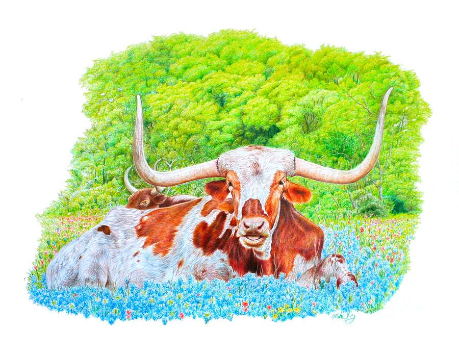 900x696 Longhorns In Bluebonnets Drawing By Mike Ivey
