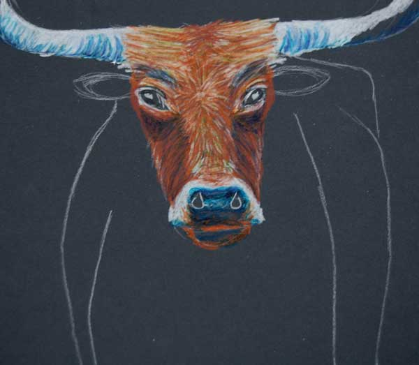 600x523 Oct 31 How To Draw A Texas Longhorn Texas Longhorns, Colored
