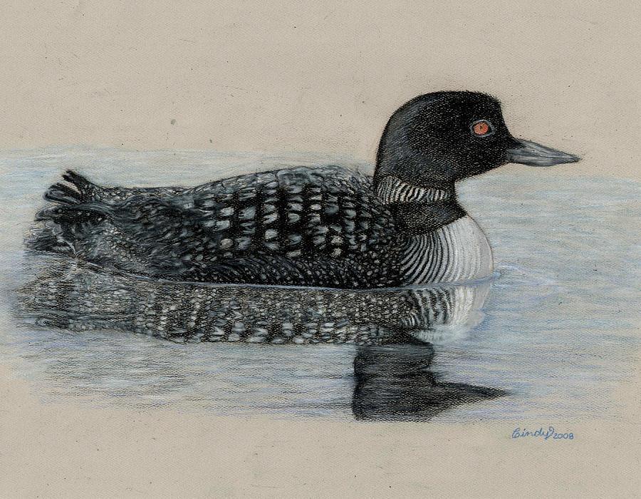 900x700 Common Loon Drawing By Cynthia Lanka