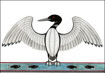 336x235 Loon Drawing Bird Illustrations Drawings, Drawing
