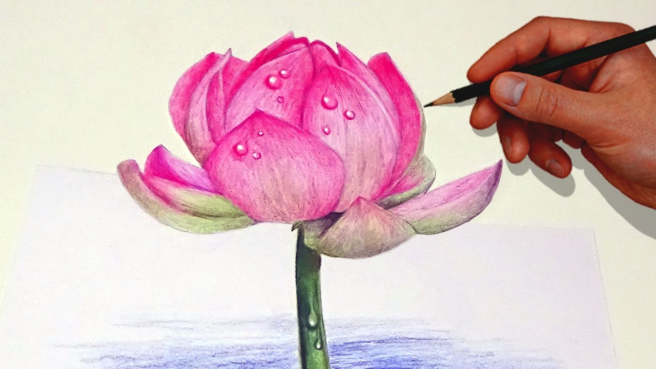 Lotus drawing at getdrawings free for personal use lotus 1280x720 drawing a lotus flower with simple colored pencils mightylinksfo Images
