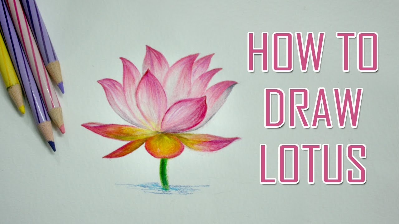 Lotus flower drawing color at getdrawings free for personal 1280x720 how to draw a flower lotus color pencil mightylinksfo