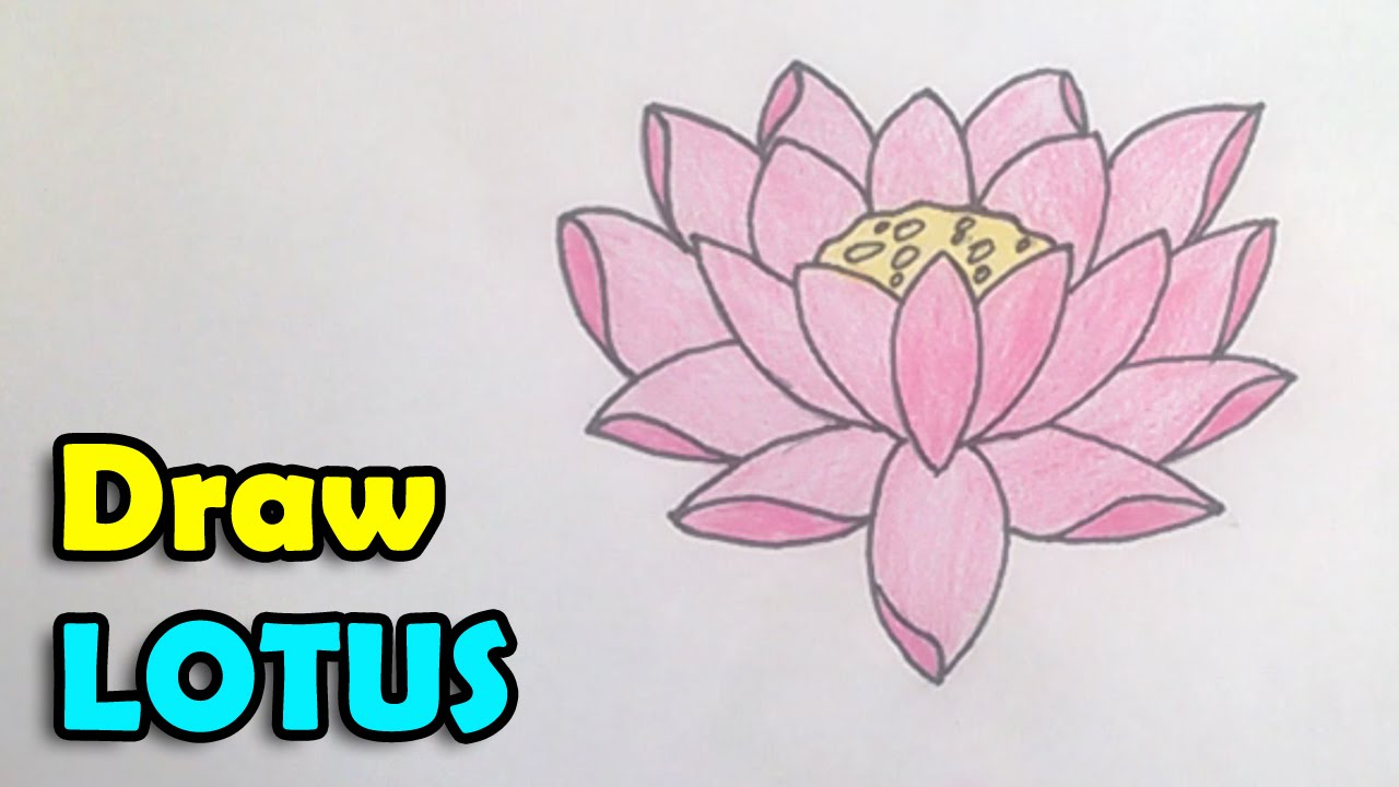 1280x720 How To Draw Lotus Flower Simple Lotus Drawing Simple Lotus Flower