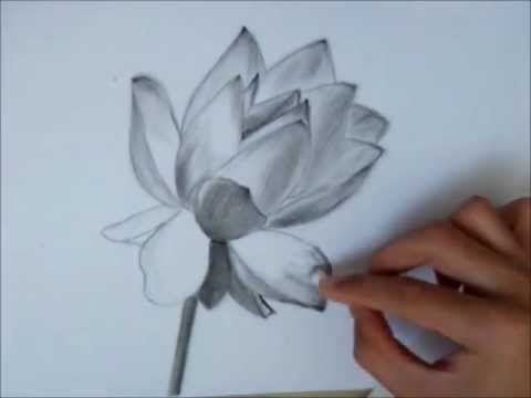 480x360 Drawing A Lotus Flower