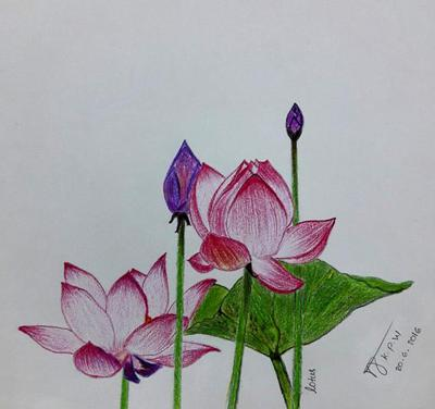 400x376 First Lotus Flower Drawing