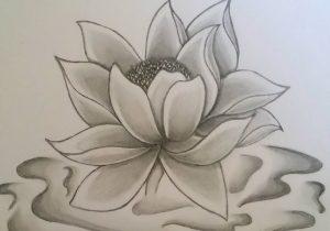300x210 Lotus Flower Pencil Drawing