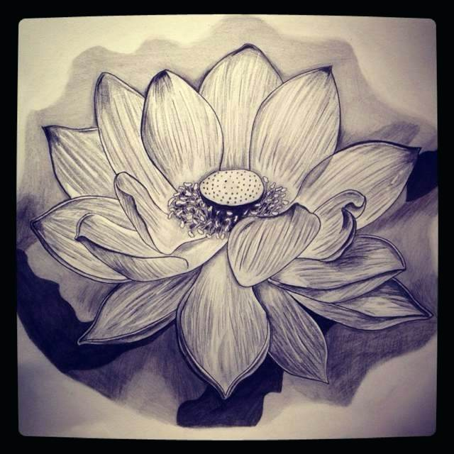 Lotus flower drawing sketch at getdrawings free for personal 640x640 lotus flower sketch how to draw lotus flower step 7 lotus flower mightylinksfo