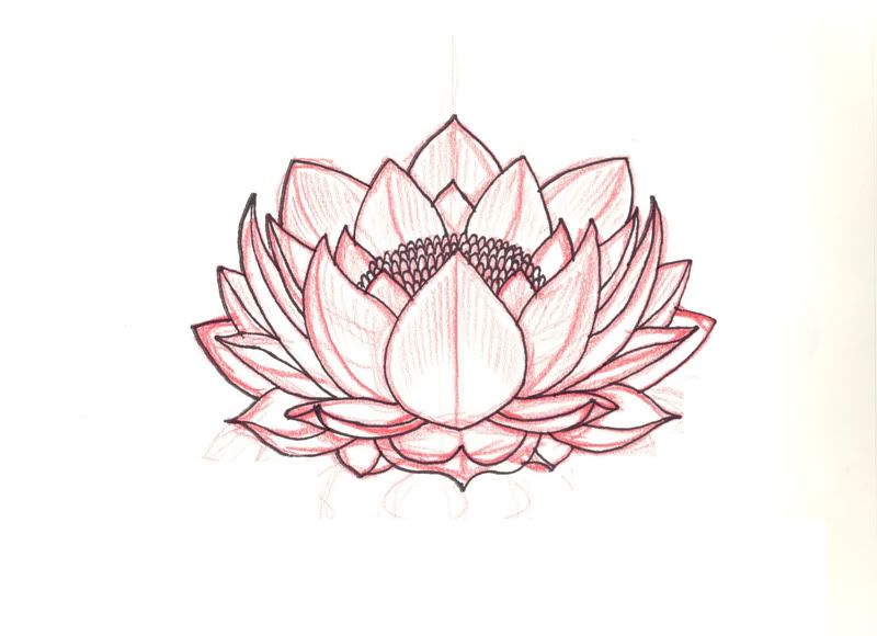 800x580 Lotus Sketch Pictures Images And Photos Tattoo