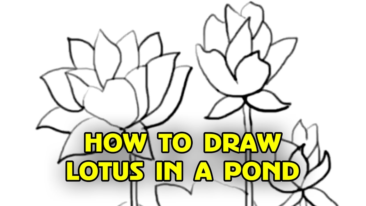 Lotus flower drawing step by step at getdrawings free for 1280x720 free tutorial how to draw lotus flowers step by step by silly mightylinksfo