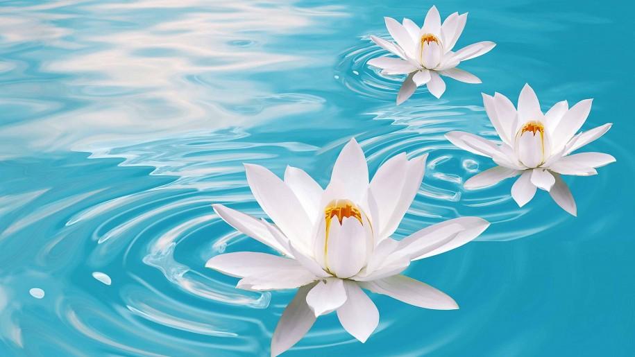 lotus flower in water drawing at getdrawings com