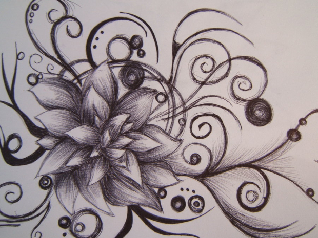Black Line Flower Drawing : White lily drawing at getdrawings free for personal use
