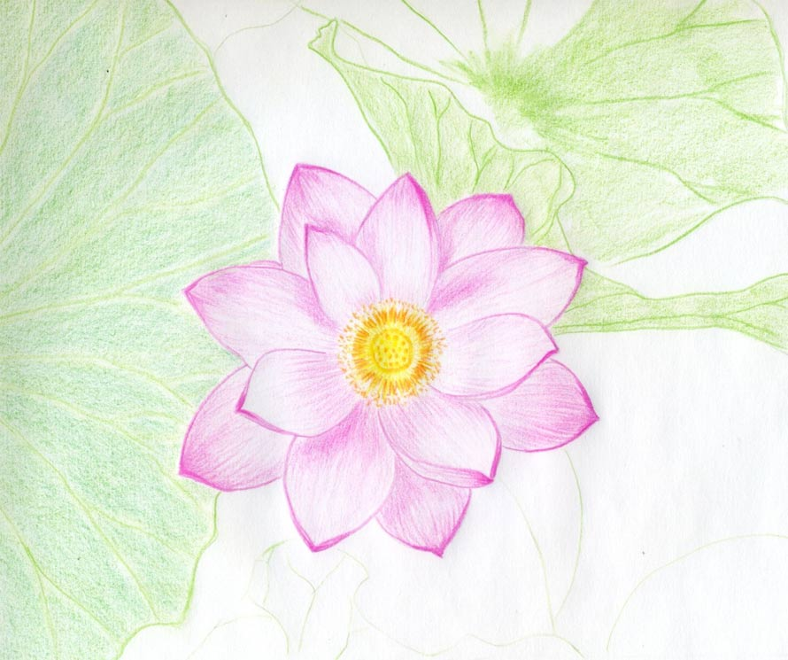 Easy Drawings Of Flowers In Pencil Lotus Flower Pe...