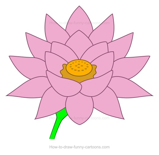 520x504 To Create A Lotus Flower Drawing