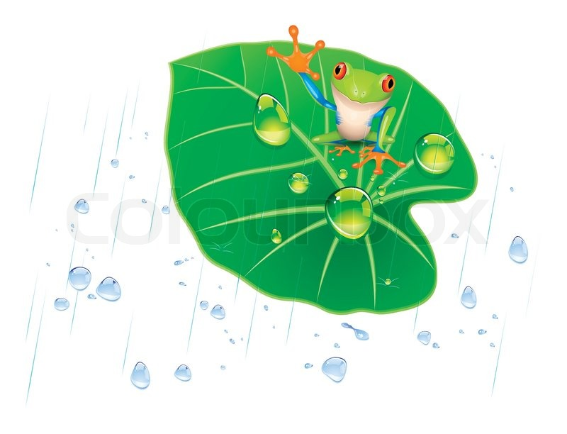 800x612 Frog On The Lotus Leaf In The Rain. Stock Vector Colourbox