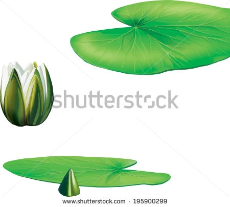 450x404 Lotus Flower With Leaves Lotus Flower And Leaves Illustration