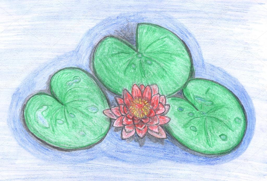 1024x696 Lotus Flower Drawing Stock Photo Nadyaus