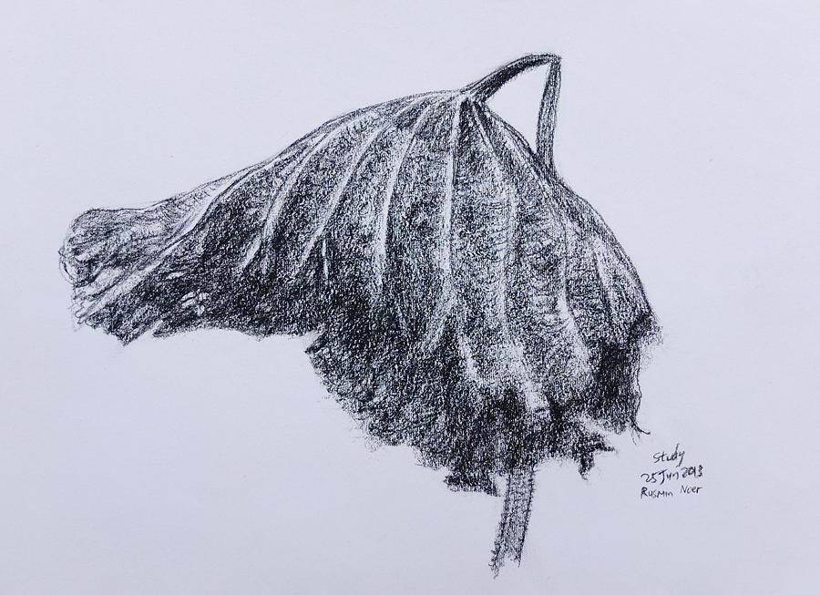 900x653 On Dead Lotus Leaf Drawing By Rusmin Noer
