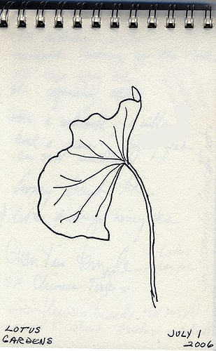 309x500 Lotus Leaf Sketch From The Trip To The Lotus Garden. Jhhymas