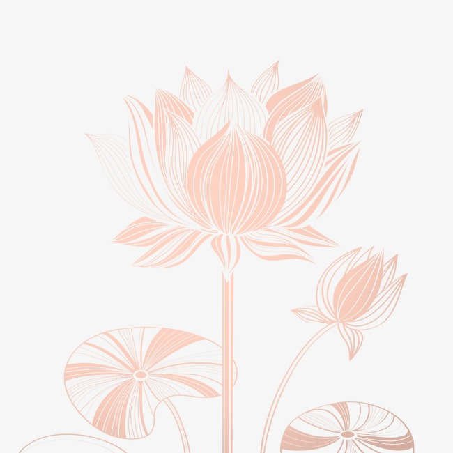 650x650 Creative Design Vector Line Drawing Lotus, Flowers, Lotus, Plant