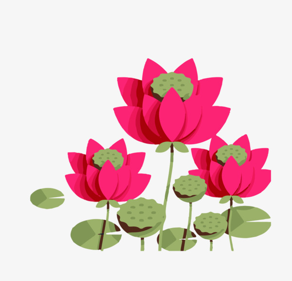 600x577 Drawing Lotus Cartoon, Red, Flowers, Lotus Png Image And Clipart
