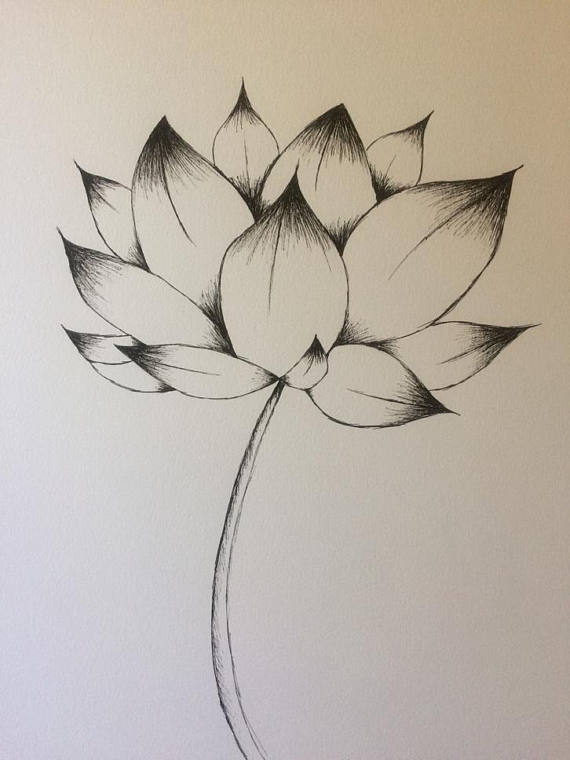 570x760 Lotus Flower Drawing Lotus Flower Ink Drawing Pen Drawing